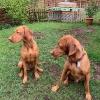 Kayla und Percy_1