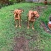 Kayla und Percy_3