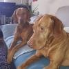 Kayla und Percy_4